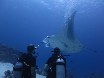 South Ari Dive Center