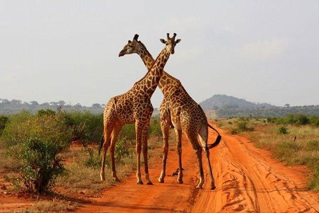 Safari Tsavo East - West (2 nopti) + Leopard Beach (5 nopti)