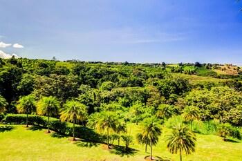 Mango Valley
