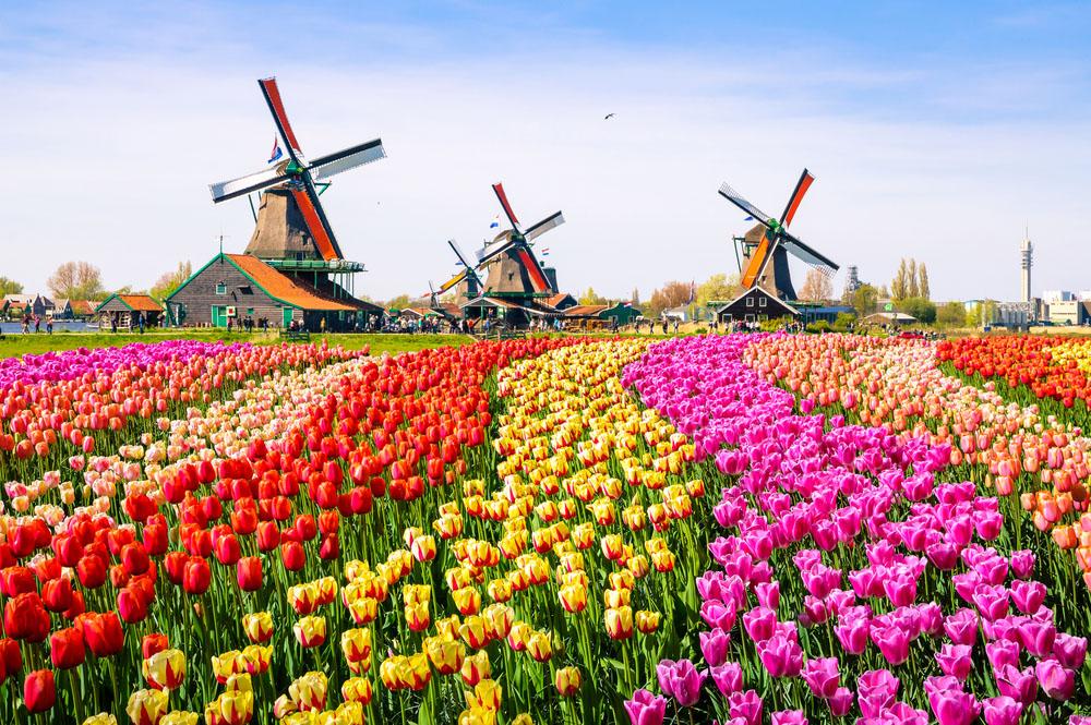 Amsterdam Inflorirea Lalelelor 2021