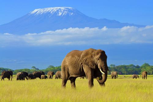 Safari si Sejur Kenya