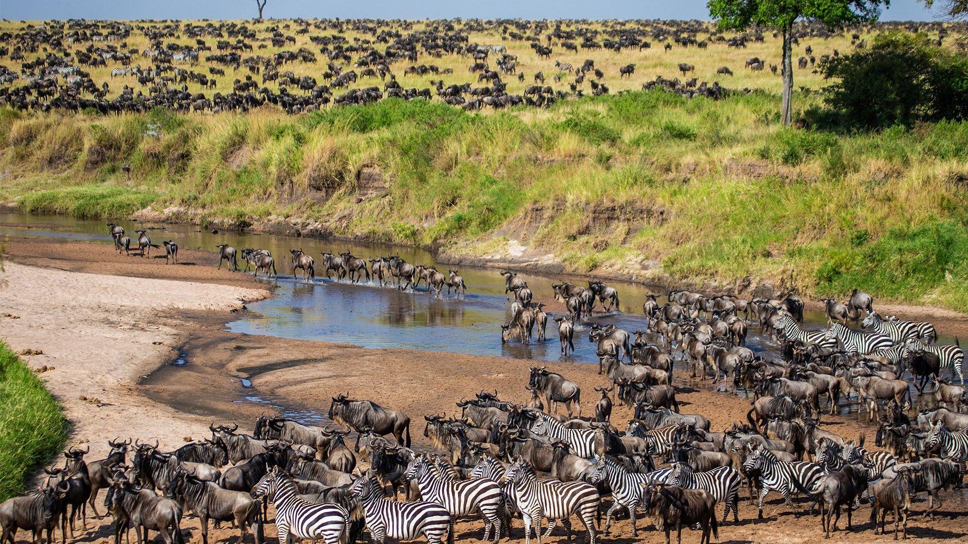 Circuit de grup - Kenya, safari Marea Migratie, 11 zile - septembrie 2021