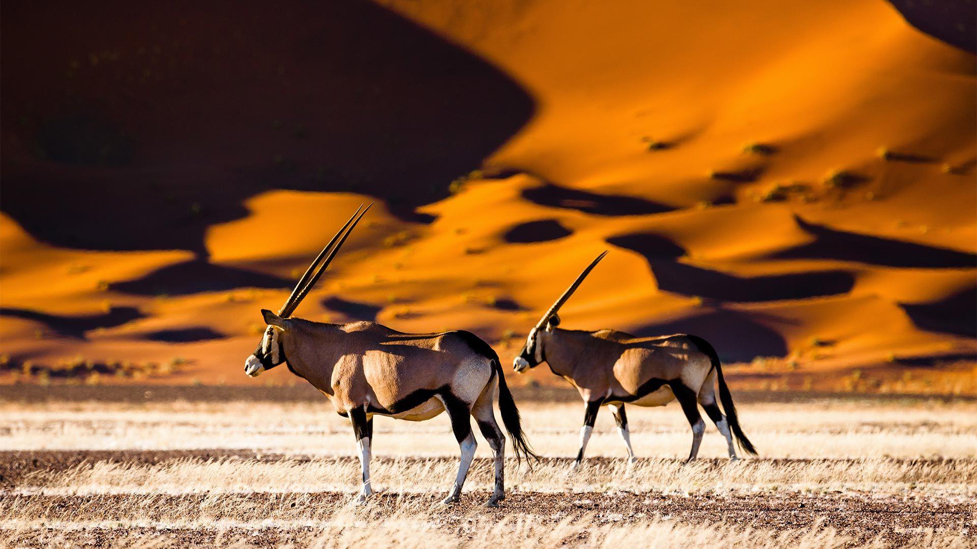 Circuit de grup - Essential Namibia, 12 zile