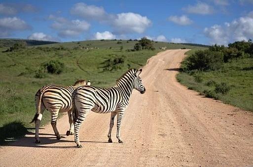 Africa de Sud - Zambia - Zimbabwe & Botswana (2021)