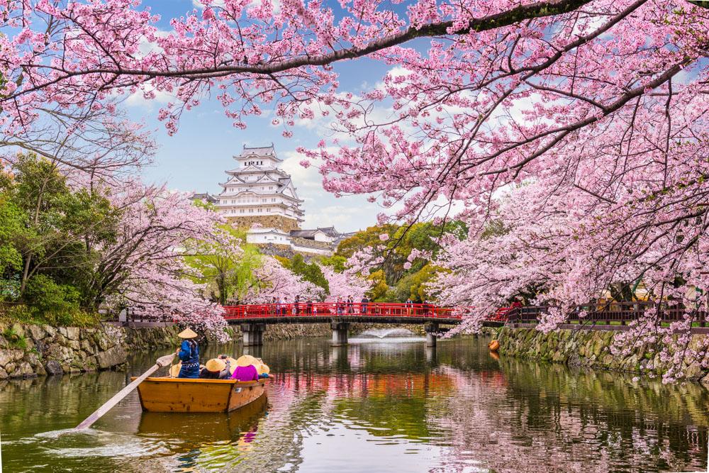 Japonia Festivalul Ciresilor in Floare 2022