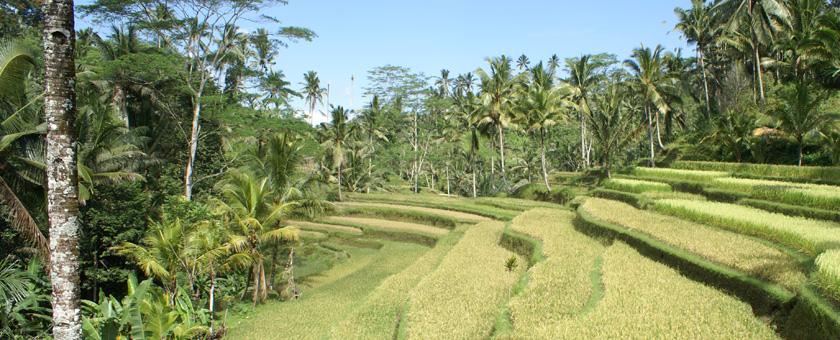 Sejur Ubud & plaja Bali Sud - iunie 2021