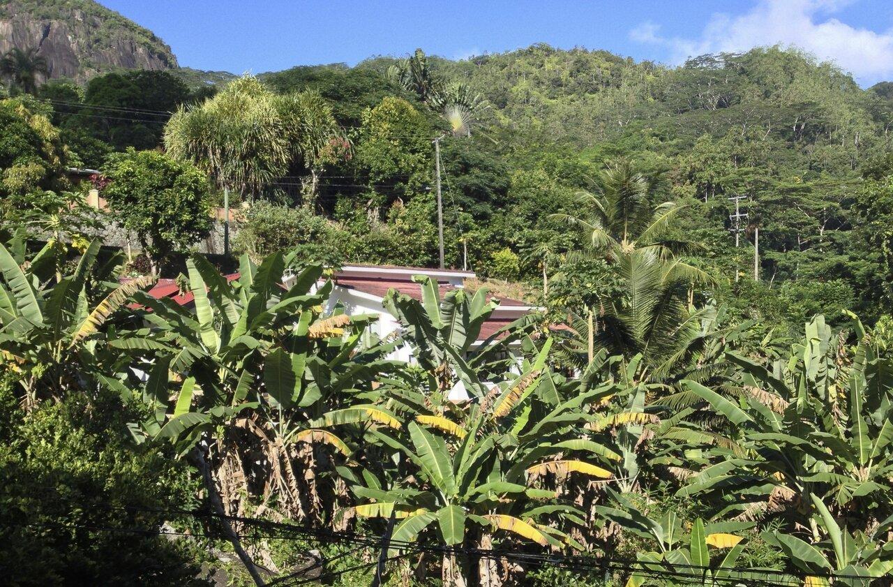 Papaya Guesthouse