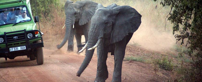 Discover Tanzania & Zanzibar - noiembrie 2020 - cu Razvan Pascu